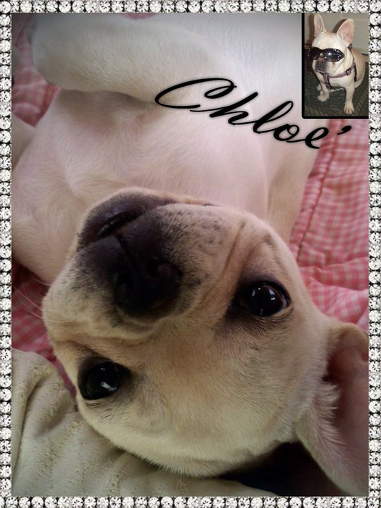 Superstar of the Month - April 2011 - Chloe