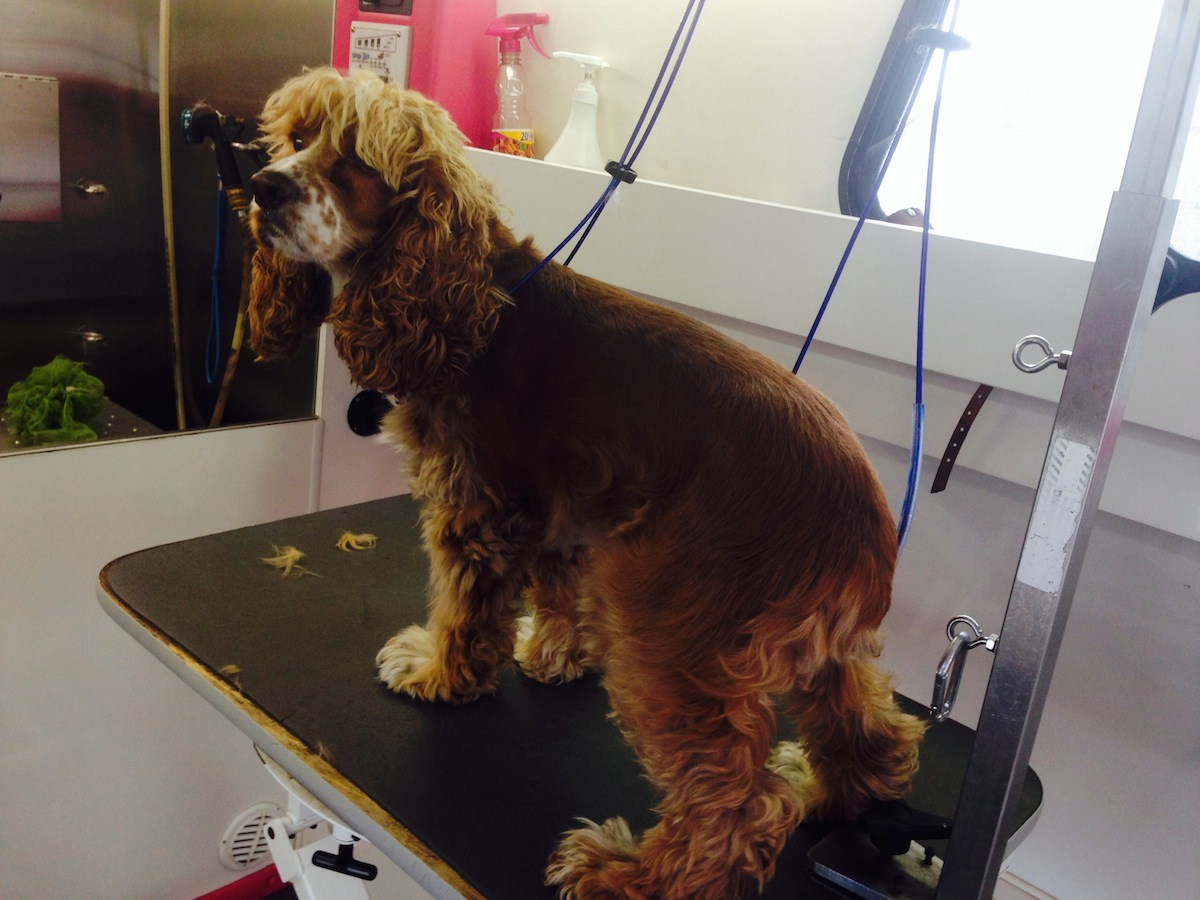 Super Star Mobile Pet Grooming Before And After Gallery
